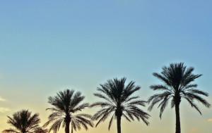palm-trees-1395324-639x401