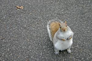 squirrel-1472656-639x425(3)