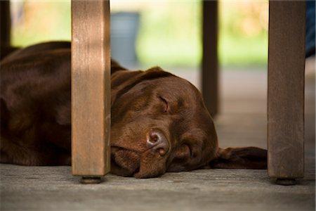 700-02671088 © Elke Esser Model Release: No Property Release: No Sleeping Dog, Belgium